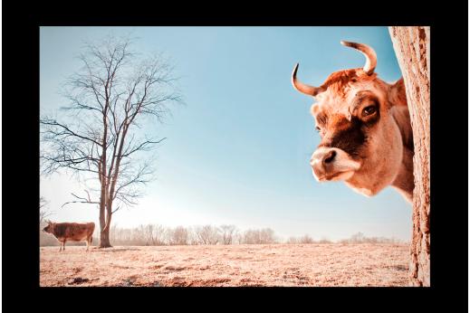 Картина Корова